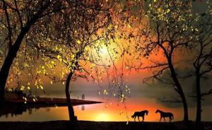 Sunset-Lake-Horses